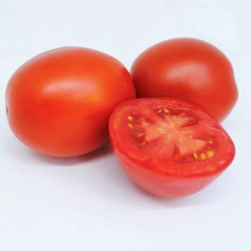 1311 f1 томат