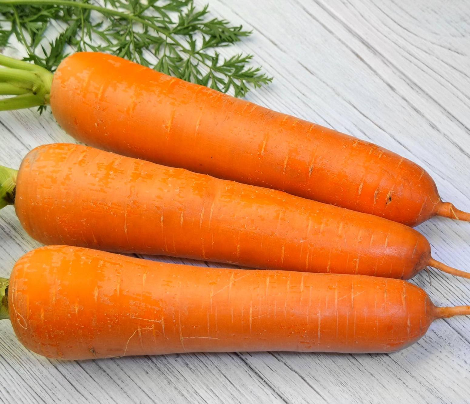 морковь титан