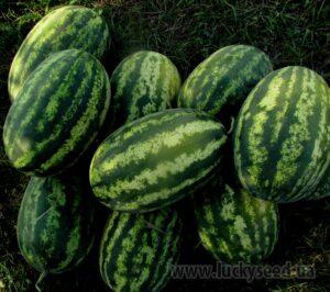 Семена арбуза LS 1807 F1