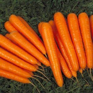 Морковь ранняя F1 тип Лагуна