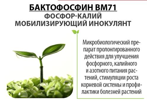 Бактофосфин BM71