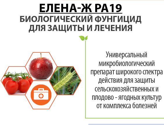 Елена-Ж PA19