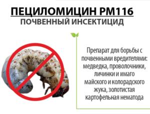 Пециломицин PM116