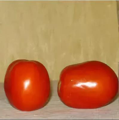 томат хортица f1 гавриш