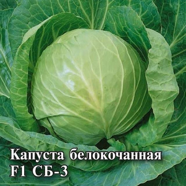 Капуста белокочанная СБ-3 F1