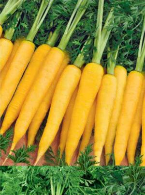 Морковь Еллоустоун