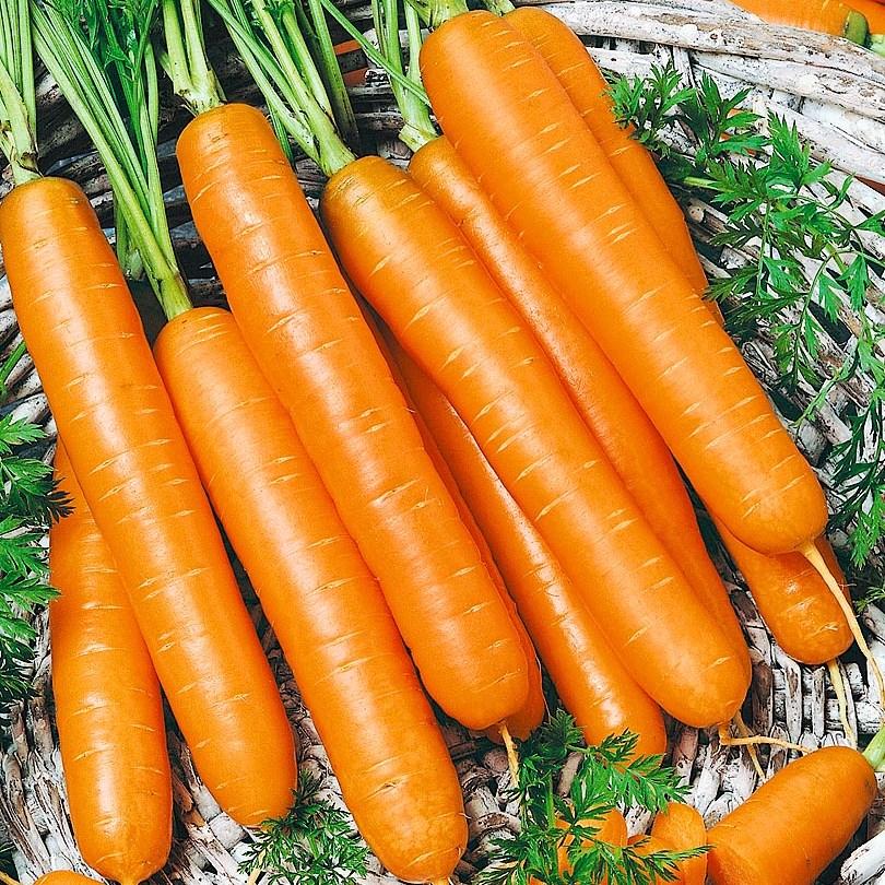 Морковь Самсон (Bejo)