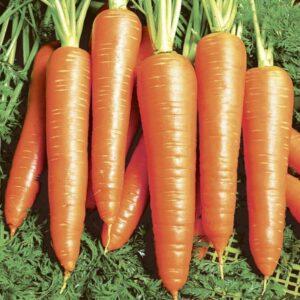 Морковь Вита Лонга (Bejo)
