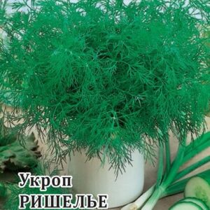Укроп Ришелье