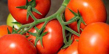 томат кс 21