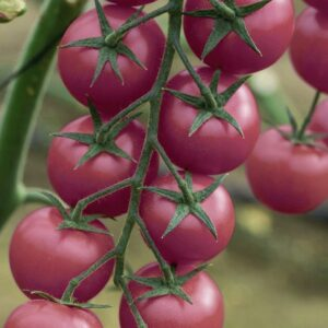 Томат ПИНК ХАНИ F1 (Pink Honey F1)